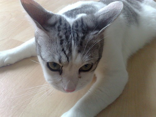 How To Reduce Swelling In A Cat S Paw