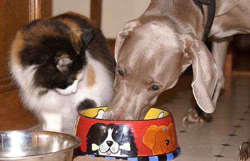 Should Cats Eat Dog Food Love Meow