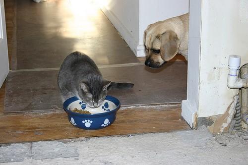 Can Cats Eat Vegies