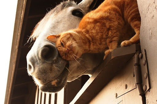 Image result for cat and horse