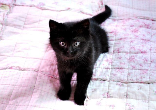 Kiwi The Little Fuzzy Black Baby Love Meow
