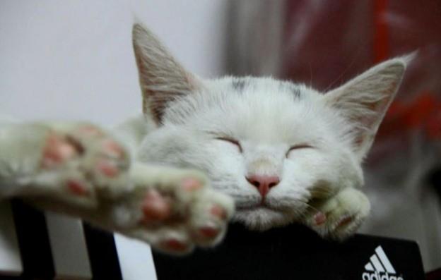 Ms White Kitten