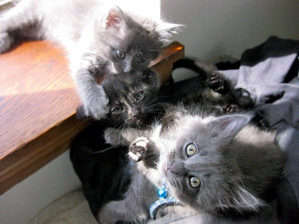 basil and sage the identical kitties love meow. Black Bedroom Furniture Sets. Home Design Ideas