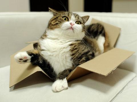 cat urinary blockage symptoms