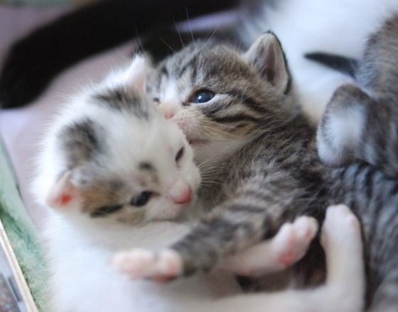 Image result for another monday kitten hugs pix