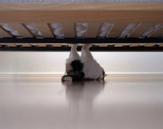 Spider Cat Lurking Under The Bed Love Meow