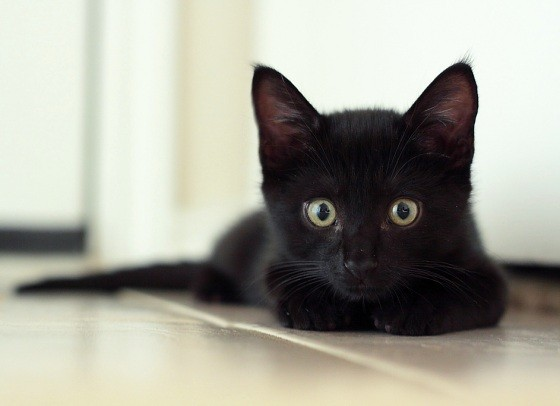 Mini Black Panther Cat