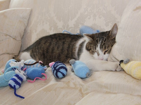Larry The Cat Chief Mouser To The Cabinet Office Love Meow