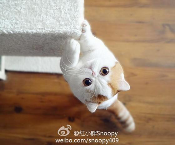 snoopy the cat new internet sensation love meow