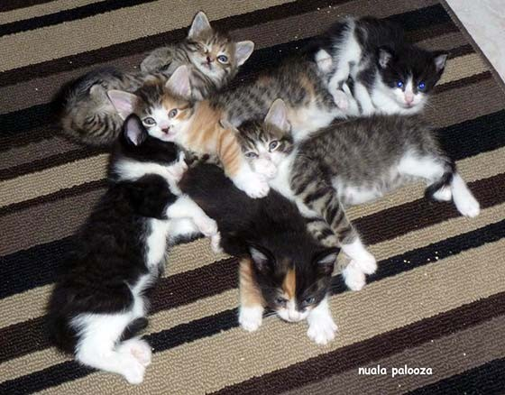 Help Mom Cat After Taking Kittens