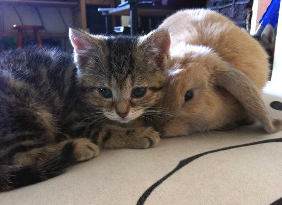 Blind Kitten and Rabbit Find Each Other & Become Best ...