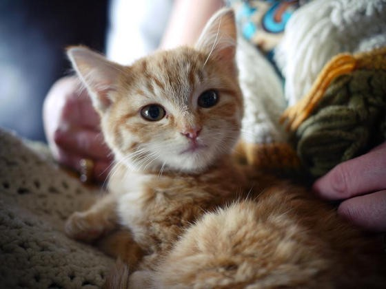 cat dewormer side effects