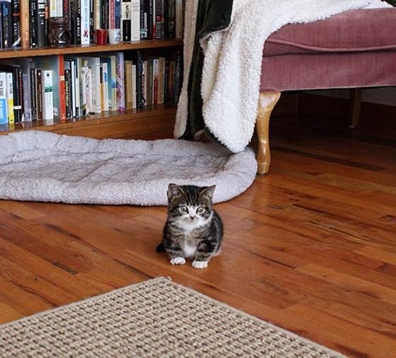 biggest savannah cat