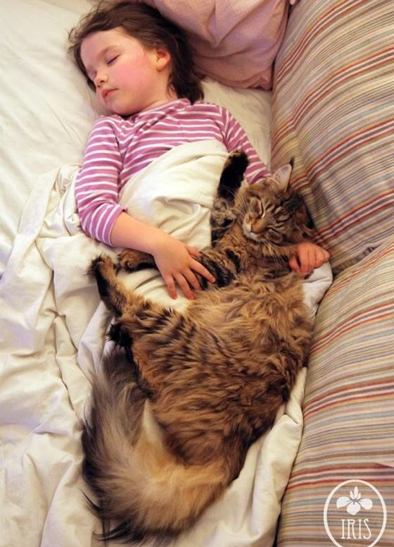 Maine coon with autistic girl