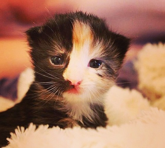 world's best cat litter pets at home