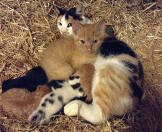 Cat Mama Adopts Big Ki...