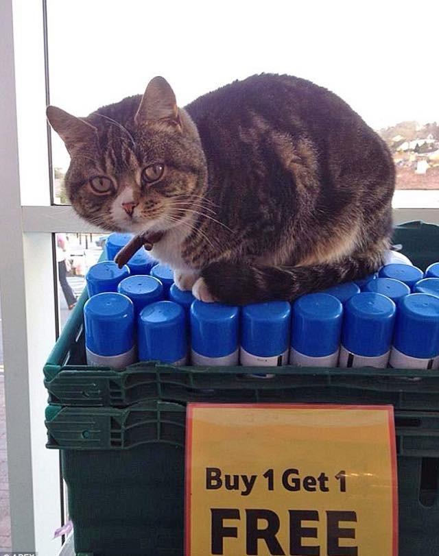 Mango The Supermarket Cat Love Meow