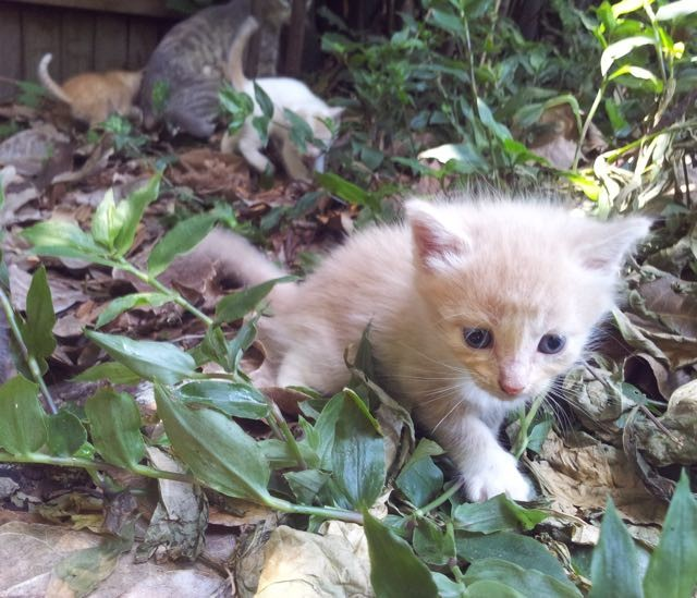 Cat In Backyard stray cat mama and her kittens turn a family's backyard into their