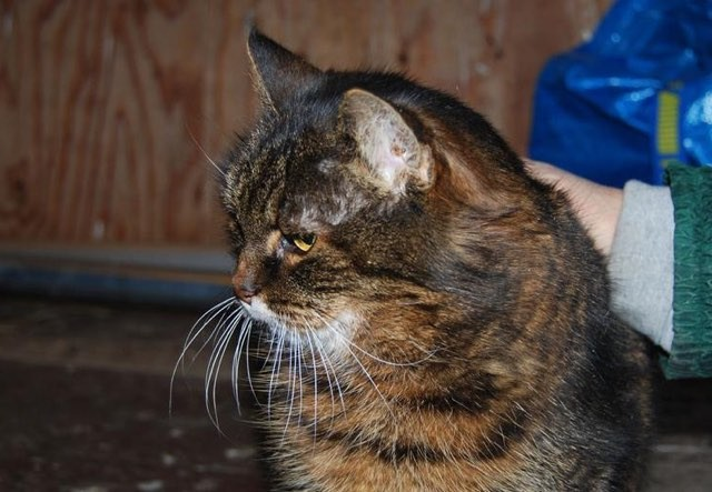 swedish woman says her cat missan turns 30 this year love meow