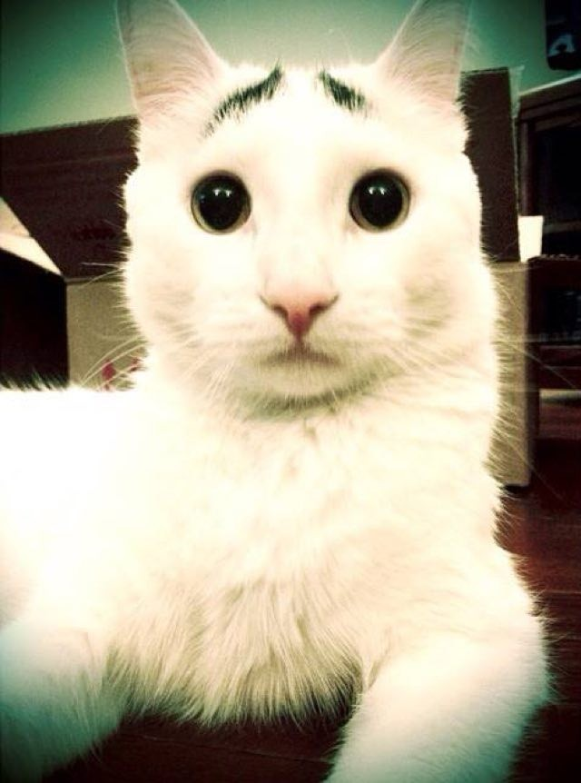 awesome-cat-love-1-240x180 (1)