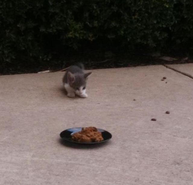 How to stop a stray cat from running away