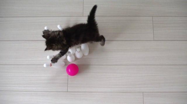 sale cat toys