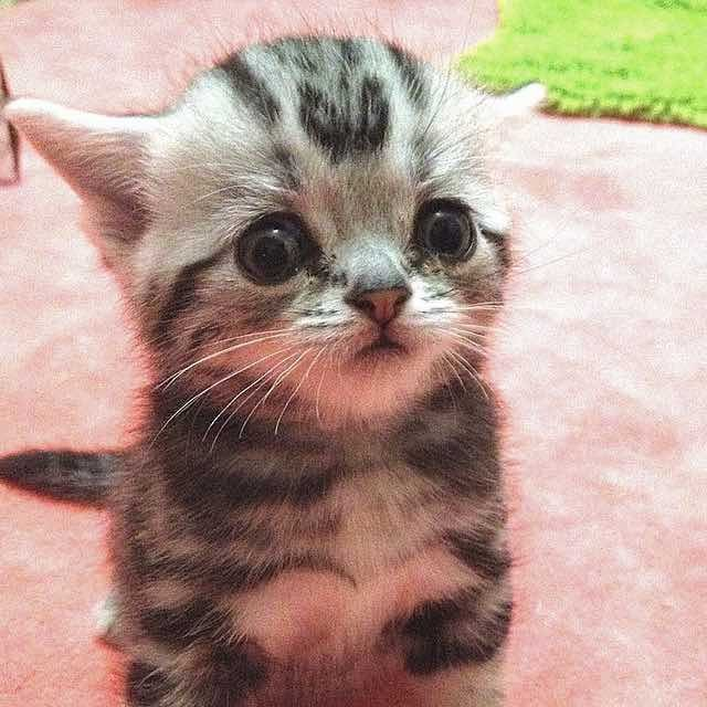 Cat With Sad Worried Eyes. He Can Get Away With Anything