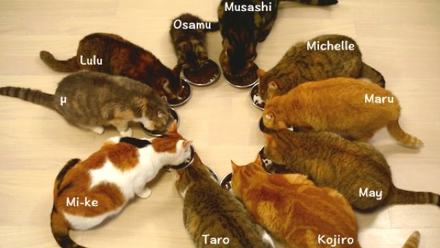 Senior Dog Food >> 10 Cats Eating Together, the Smallest One Makes the Most ...