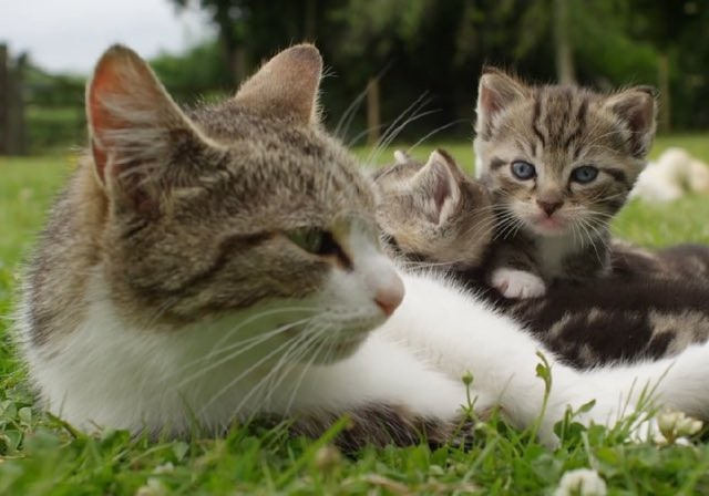 Can A Mother Cat Remember Her Kittens
