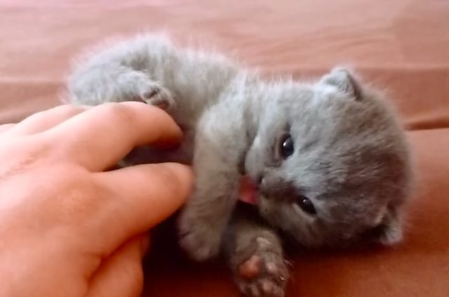Those Little Paws Quotes: Those Little Paws Start Whapping Around When They Tickle