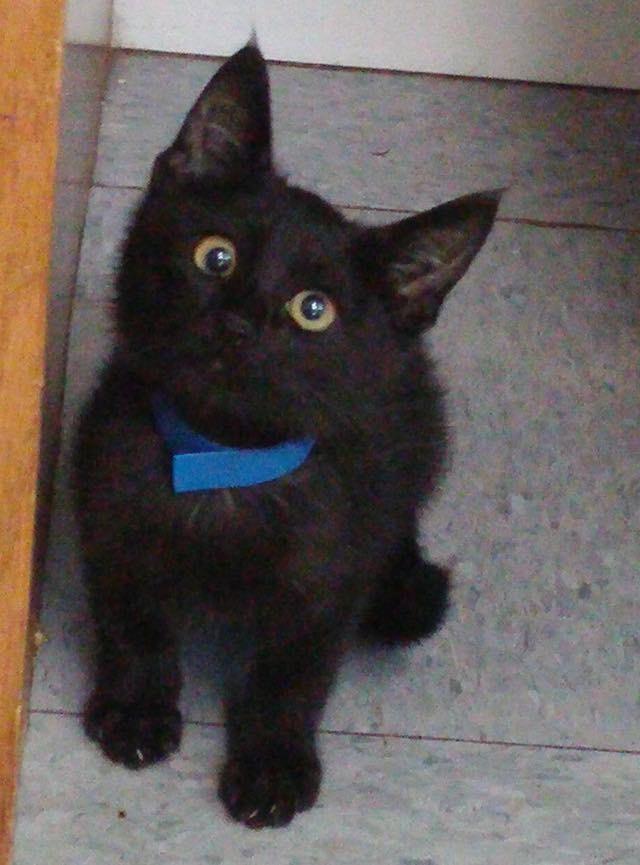 cat mate elite door