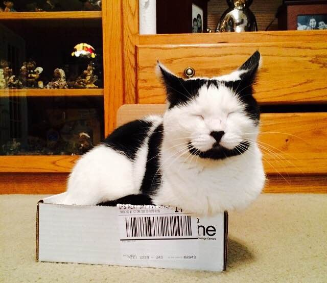 Image result for happy cat images