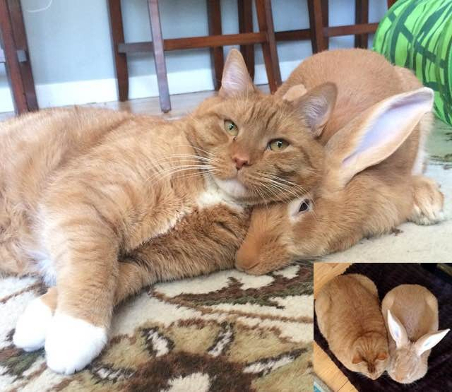 Ginger Cat And His Giant Rabbit Twin Brother Truly