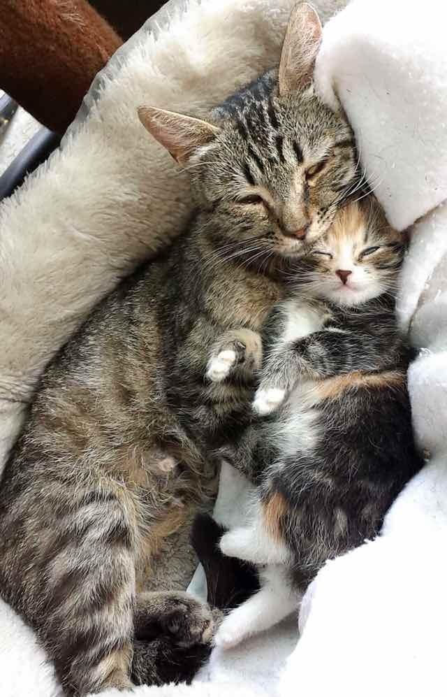 Mom single mom brings home new man every night - 3 part 5