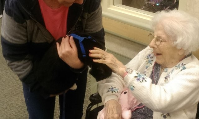 Dogs Visit Nursing Home In Cape