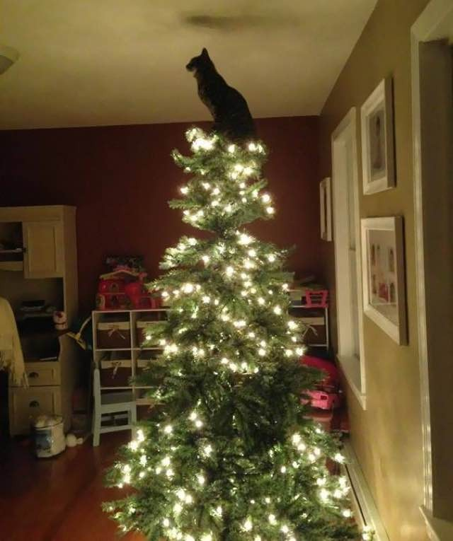 10+ Cats Proud of their Work with the Christmas Tree - Love Meow