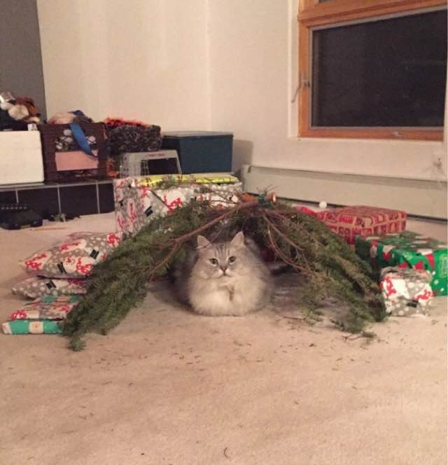 Are Christmas Trees Bad For Cats: 10+ Cats Proud Of Their Work With The Christmas Tree