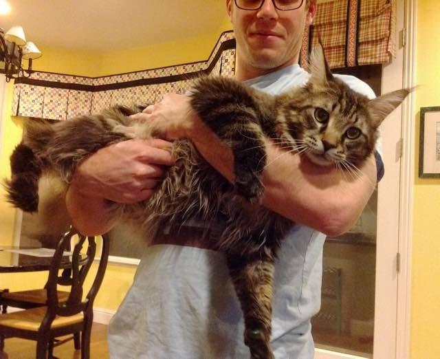 why cats make good pets