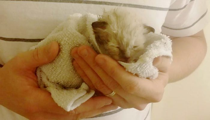 Couple Save Kitten from Thunderstorm with Stray Mama's Help