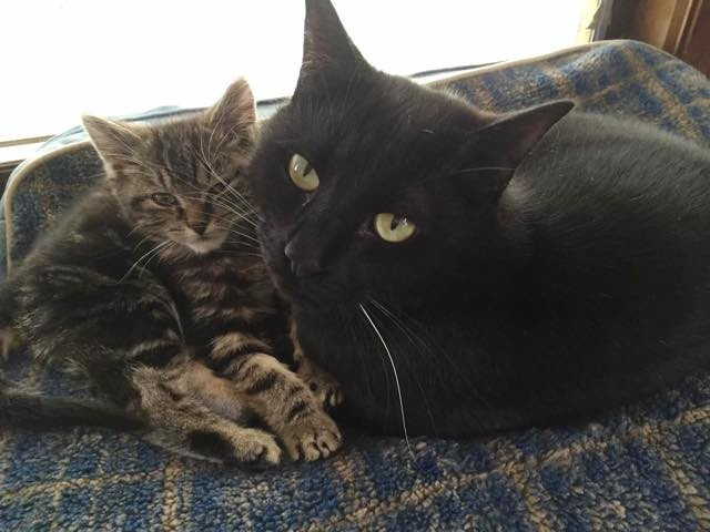 Androscoggin Humane Society >> Rescue Kitten Surprised Everyone How Much He Enjoyed Bath - Love Meow