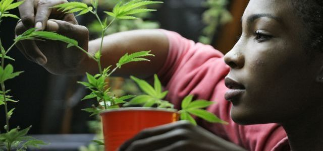 What Do Influential Black Leaders Want From Marijuana Legalization?