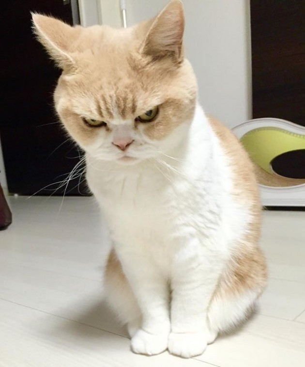 She's Not Mad. This Cat Just Has a Perpetual Disapproving ...