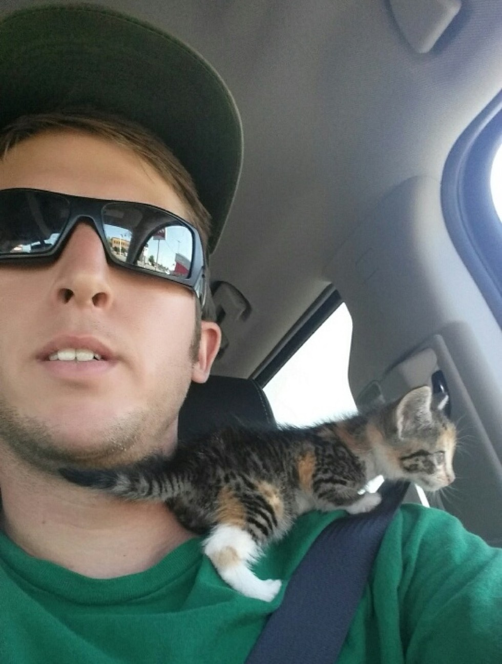 stray calico kitten rescued by young man climbing shoulder