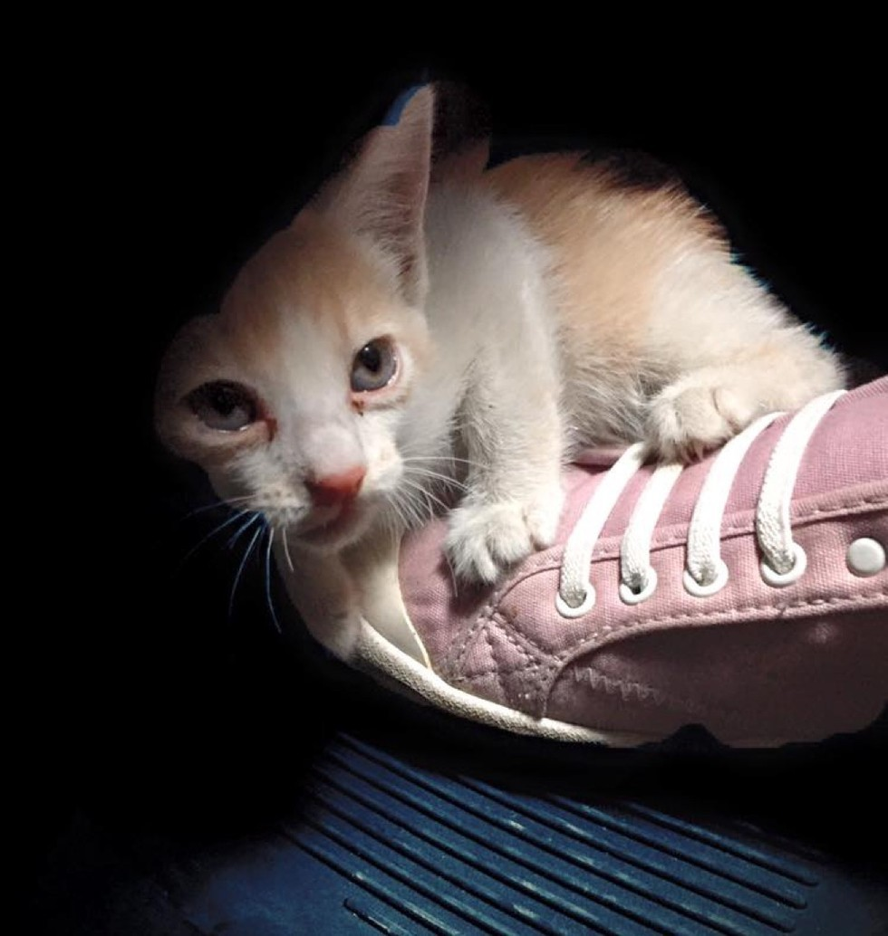 traffic police rescues kitten before run over by bus kitten adopted