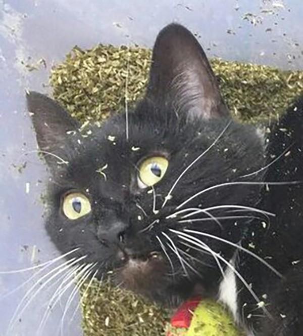 cat can\u0027t wee