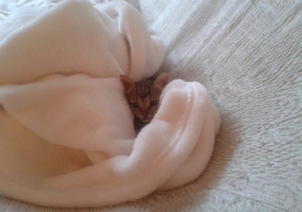 kitten rescued from roadside found love