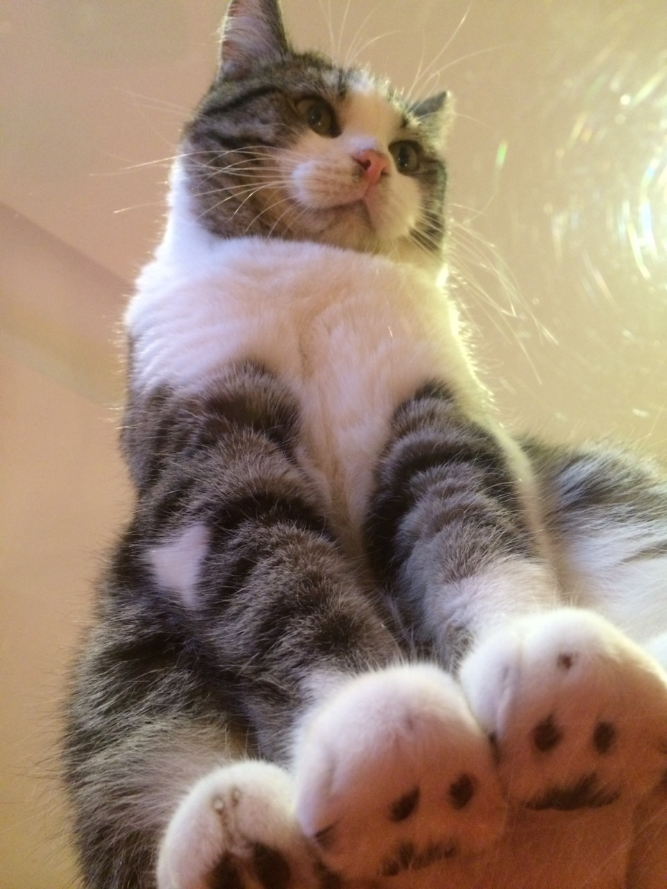 fluffy cat sitting
