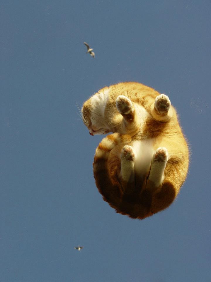 cat in air