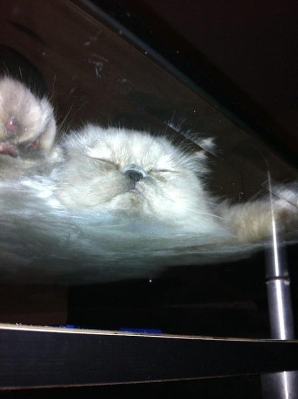 cat on table sleeping