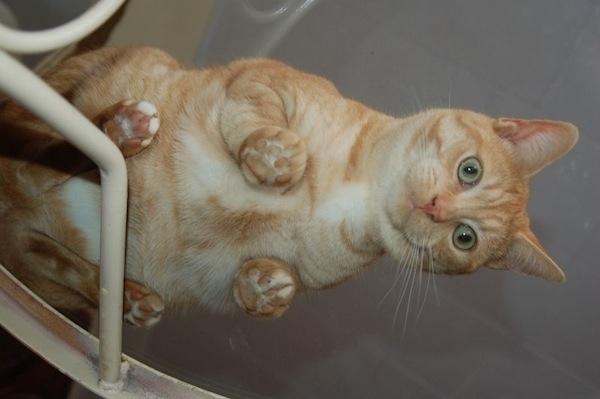 cat sideways table